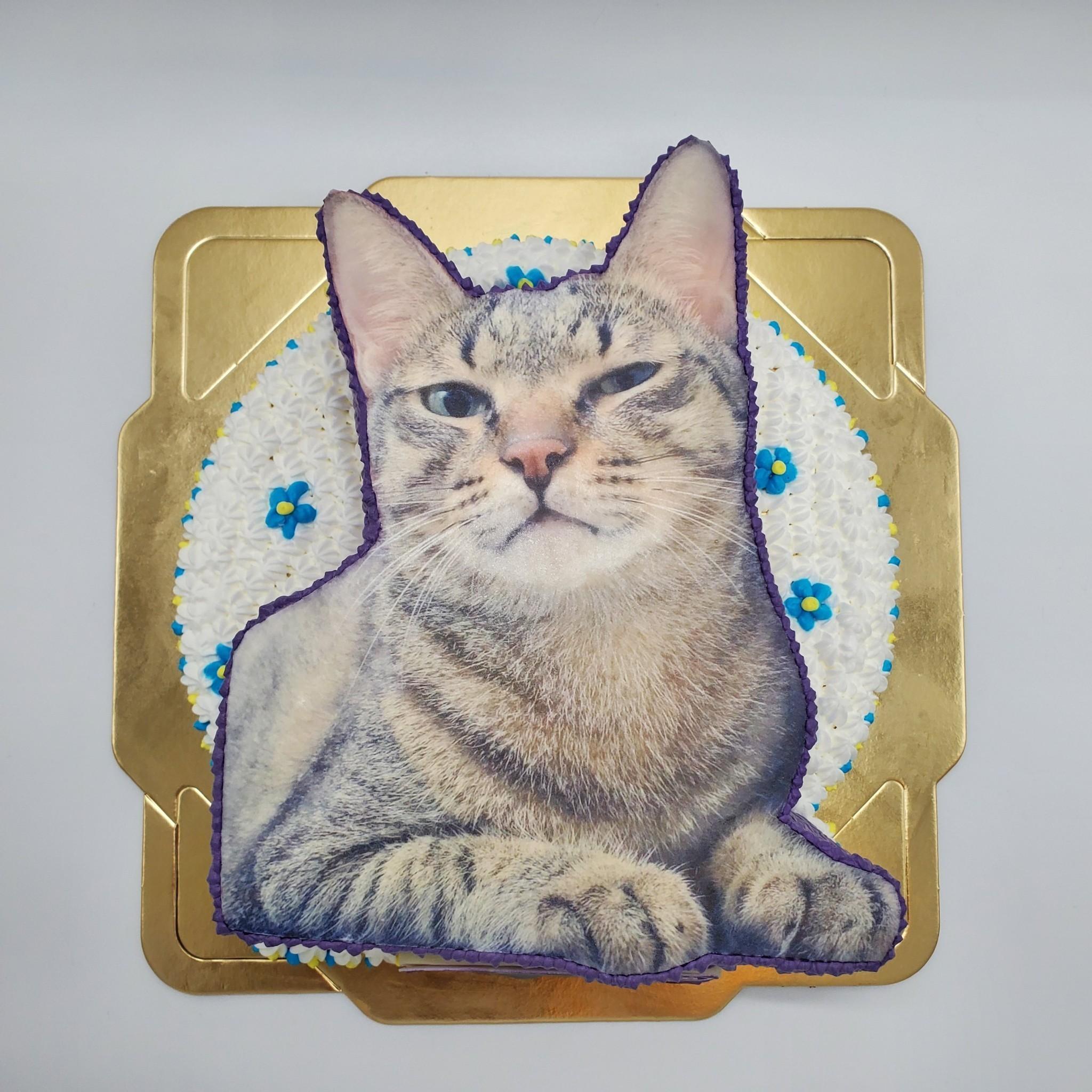 貓咪數位2D造型蛋糕